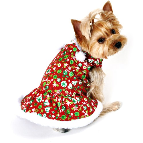 A cute dog without a pet id tag in a Christmas costume